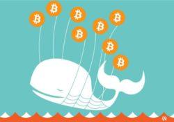 bálnák crypto hiriek mycryoption