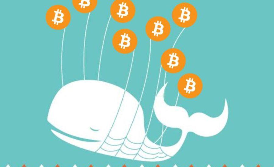 balenele bitcoin știri crypto bitcoin bálnák crypto hiriek mycryoption